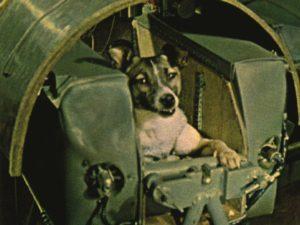 Laika premier chien dans l'espace