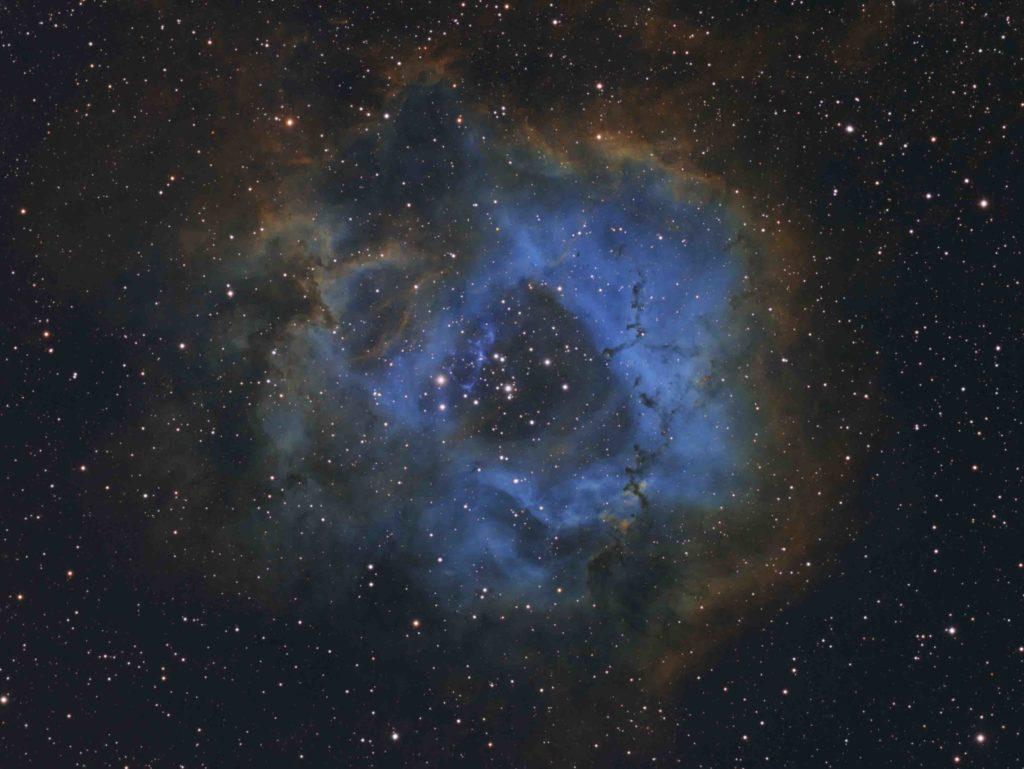 Stellar Flower © Davy van der Hoeven