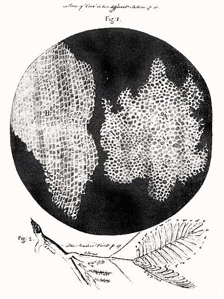 Robert-Hooke-Micrographia-1665